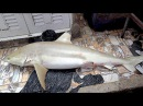 Cooking a 50 Pound SHARK $1000 Fish in 3 Ways