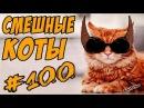 Смешные Кошки ДО СЛЁЗ Коты Приколы с Котами и Кошками 2018 Funny Cats