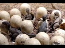Сенсационная находка шокировала весь мир! Обнаружены яйца древних динозавров, которым миллионы лет!