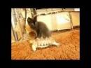 Смешные кошки Приколы КОТ 0078