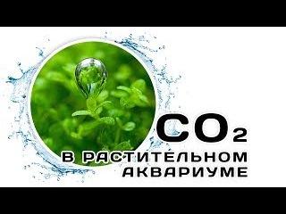 Роль CO2 в растительном аквариуме. Основы