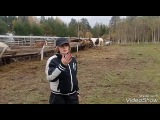 Репортаж с конно-туристической базы отдыха Новая Ельня.