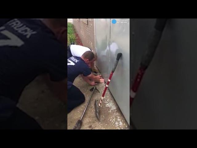 Спасение кошки пожарными Чикаго