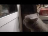 Кот говорит_ открой мне