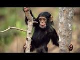сайт про обезьян версия 1.0.0. (открытие НЕ скоро)