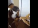 Я тебе покажу, кто в доме главный!