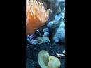 Рачок копает себе домик под кораллом