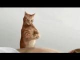 Показал видео жене - закатила коту скандал, что за левая девка такая...