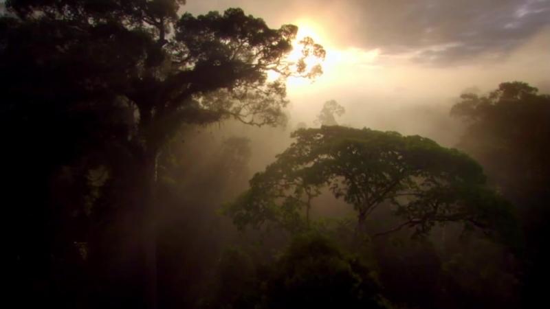 La Nature Parle Sophie Marceau est Mère Nature