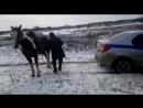 пытаются вытащить застрявшую машину, привязав веревку к хвосту лошади.