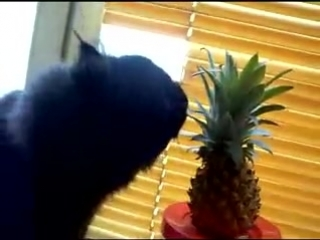 лижет кошка АНАНАС