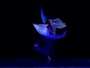Yallar veil fan dance 20963