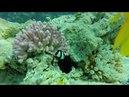 Бухта Рас Ум Эль Сид отель Reef Oasis Beach Resort ноябрь 2017, Хадаба, Шарм-эль-Шейх, Египет