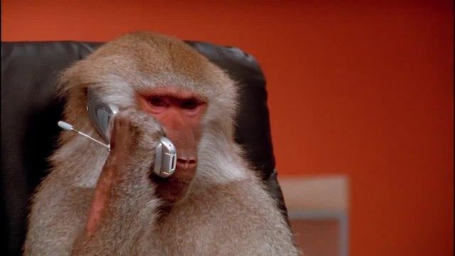 Prikol po telefonu