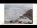 Уязвимости в прошивках австралийских животных - Валерий