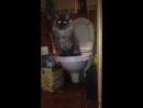 Приучен к туалету