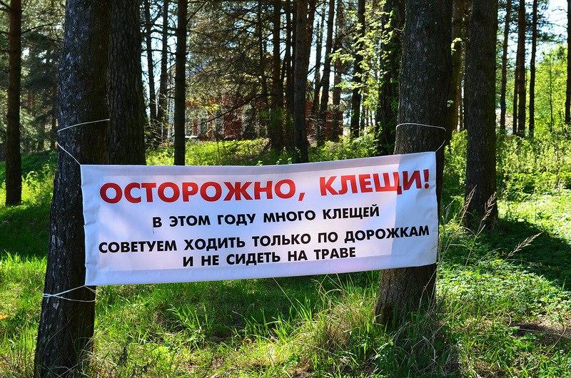 ВЛипецкой области занеделю 329 человек подверглись укусам клещей