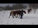 Секреты успеха продвинутого воспитания лошади