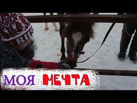 Влог. Катание на лошадях. Кормим лошадь. Развлечение для детей.