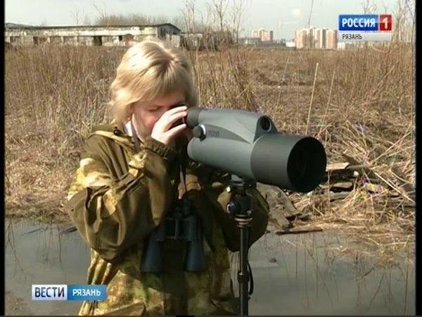 В Рязанскую область возвращаются перелетные птицы. Вести-Рязань