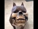 Очень злая собака,😂😂😂😁