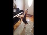 Пес Меркурий играет на пианино и поет!