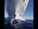 Дельфин прыгает перед огромной яхтой