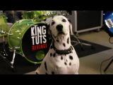 MAD WORLD Ska Punk Cover by KING TUT'S REVENGE