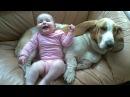 Basset Hound Dog kisses and Baby giggles Dog Loves Baby Compilation