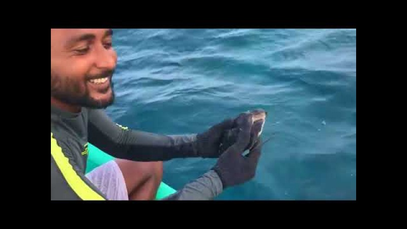 Guys Save Small Sea Turtle Tangled in Debris - 986087