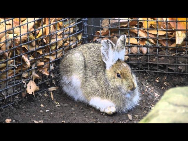Creature Feature: Snowshoe Hares