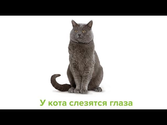 У кота слезятся глаза. Ветеринарная клиника Био-Вет.