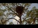 AEF NEFL Eagles ~ Sky Flies to Branch Twice ~ 02·16·18
