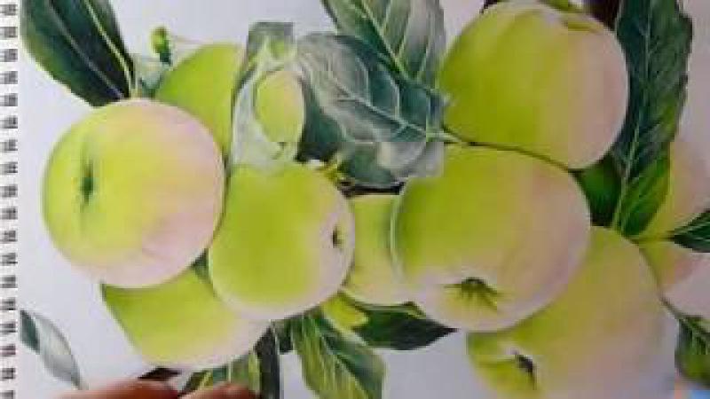 Рисуем зеленые яблоки цветными карандашами. Часть 7