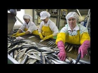 Работа в Польше на рыбозаводе Вакансии в Польше