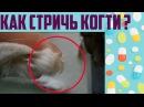Как подстричь когти кошке или коту в домашних условиях видео инструкция.