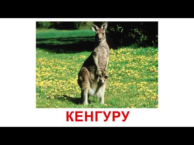 Картки Домана - Дикі тварини (українською)