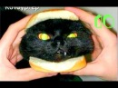 Приколы С Котами. Приколы С Животными До Слез. Коты Приколы. Кошки Приколы Смешны...
