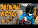 Смешные коты ДО СЛЁЗ Кошки 2018 Приколы с кошками и котами Funny cats