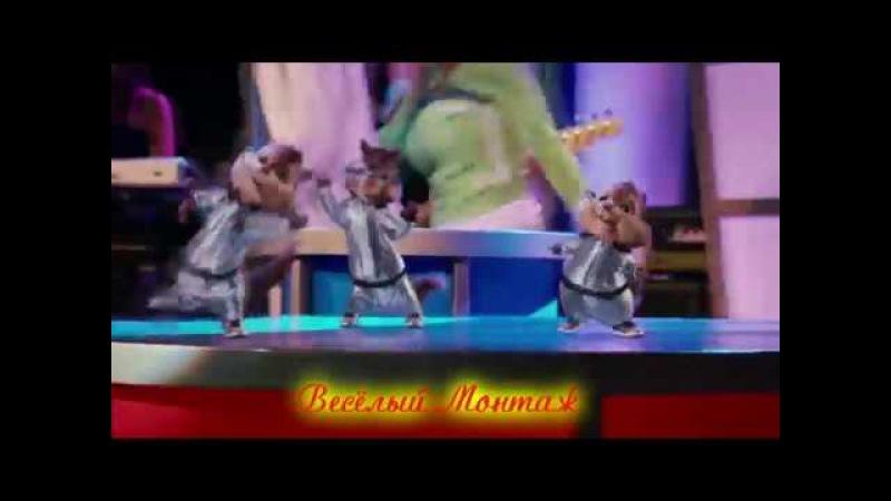 Элвин и Бурундуки поют NACHO - Bailame