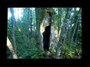 Hollow tree -Ontto puu Mankissa