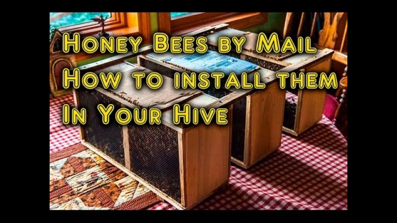 How To Start Keeping Bees Package Bees and How to Install Them Very Easy