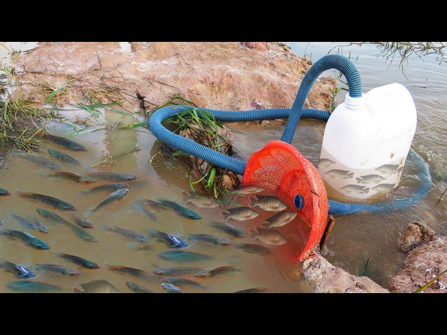 Believe This Fishing? Unique Fish Trapping System Using Long Pipe Big Plastic Bottle By Smart Boy