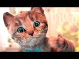 Крошка Котенок-Мой Любимый Кот.Любимый Питомец Возвращается с Новыми Мини-Играми.Мультики для Детей