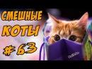 Приколы с котами 2017 ДО СЛЁЗ Смешные Коты Видео Кошки
