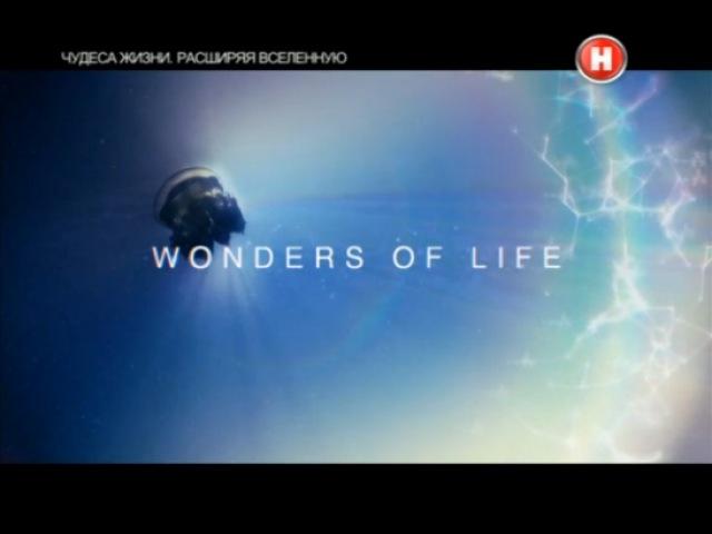 Чудеса жизни. Расширяя Вселенную / Expanding Universe