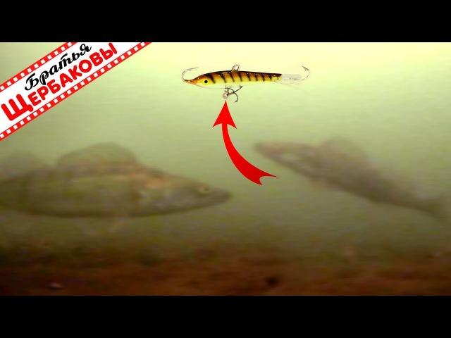 Офигеть, сколько судаков под лункой! А они еще и клюют?! ) Подводная съемка