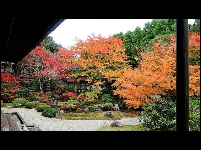 京都 泉涌寺 紅葉(2017-11)Sen'nyū-ji Temple with autumn leaves, Kyoto