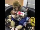 Смешное видео. Обезьяна кормит малыша / Ржу не могу The monkey feeds the baby