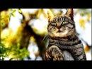 Кот достигший просветления!